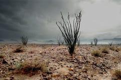 沙漠雨冬天 免版税库存照片