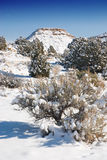 沙漠雪 免版税库存照片