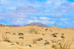 沙漠风景在佛得角,非洲 库存照片