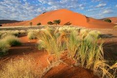 沙漠风景,纳米比亚 免版税库存图片