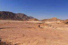沙漠风景,路,骆驼 免版税库存图片