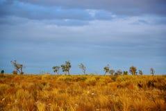沙漠风雨如磐草的天空 图库摄影