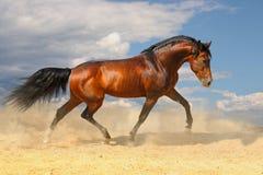沙漠马运行中 图库摄影