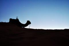 沙漠骆驼剪影 免版税库存图片
