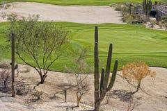 沙漠高尔夫球场绿色 免版税库存图片