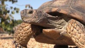 沙漠龟关闭 股票视频
