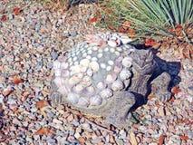 沙漠龟----混合画法艺术 库存图片