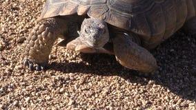 沙漠龟头 股票录像