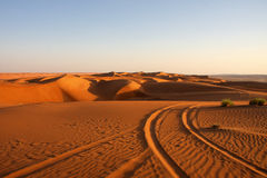 沙漠 免版税图库摄影