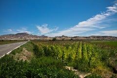 沙漠bardena参观的惊人的风景在蓝天,西班牙的 免版税库存照片