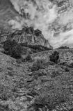 沙漠BW的野花 免版税图库摄影