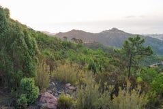 沙漠de les Palmes 图库摄影