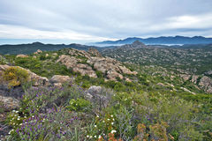 沙漠des Agriates岩石风景在北可西嘉岛 库存照片