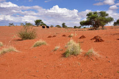 沙漠kalahari纳米比亚 库存照片