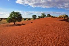 沙漠kalahari纳米比亚 免版税图库摄影