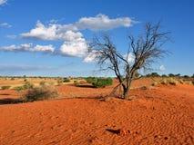 沙漠kalahari纳米比亚 免版税库存照片