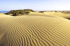 沙漠Maspalomas Gran Canaria 库存图片