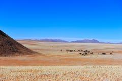 沙漠namib纳米比亚 库存照片