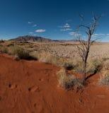 沙漠namib纳米比亚 免版税库存图片