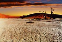 沙漠namib纳米比亚sossusvlei 免版税图库摄影