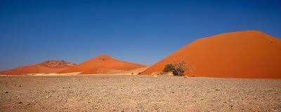 沙漠namib 库存照片