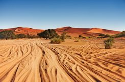 沙漠namib 免版税图库摄影