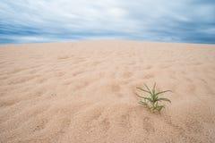 沙漠Scape 库存图片