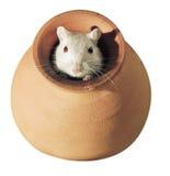 沙鼠 免版税库存照片