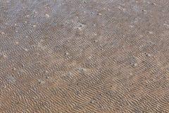 沙滩沙子纹理  库存照片