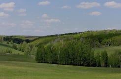 沟壑的桦树树丛 库存照片