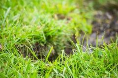 沟槽在与草的地面 免版税图库摄影