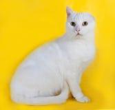 没有一个耳朵的白色猫在黄色 免版税库存照片