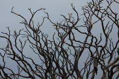 没有事假的树 免版税库存照片