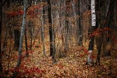 没有人的秋天森林 免版税库存照片
