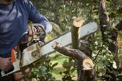 没有保护的人,与锯的裁减树 免版税库存照片