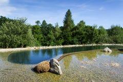 没有化学制品的自然游泳池塘净化水通过过滤器和植物 库存照片