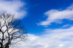 没有叶子、蓝天和白色云彩背景的一棵树 库存图片