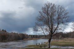 没有叶子的一棵美丽的树 在长凳附近 反对背景河,森林,雨云 一些反弹严格晴朗那里不是的蓝色云彩日由于域重点充分的绿色横向小的移动工厂显示天空是麦子白色风 免版税库存照片