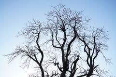 没有叶子的一棵贫瘠树在秋天 免版税库存照片