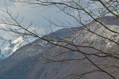 没有叶子的一棵高大的树木在灰色山背景和在距离您能看到用雪报道的峰顶 库存图片