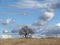 没有叶子的偏僻的树在领域的晚秋天 与云彩的无限蓝天 免版税库存照片