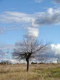 没有叶子的偏僻的树在领域的晚秋天 与云彩的无限蓝天 库存照片