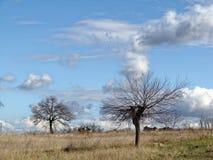 没有叶子的偏僻的树在领域的晚秋天 与云彩的无限蓝天 免版税库存图片
