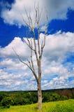 没有叶子的偏僻的树在领域 免版税库存图片