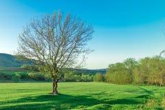 没有叶子的偏僻的树在绿色山谷 图库摄影
