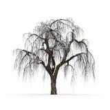 没有叶子的冬天树在白色背景3d翻译 免版税库存图片