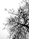 没有叶子的分行 免版税图库摄影