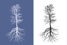 没有叶子的剪影树 免版税库存图片