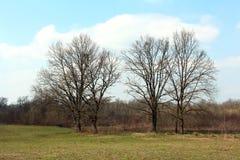 没有叶子的四棵高大的树木在冬天 免版税库存图片