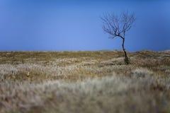 没有叶子的干燥树在干草原的路 图库摄影